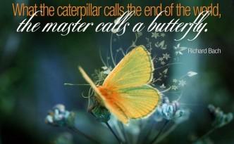 image - caterpillar-butterfly